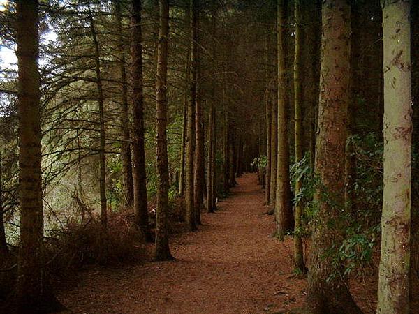 Photo: Gareth Jones via Flickr