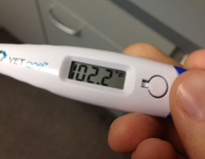 flu-thermometer